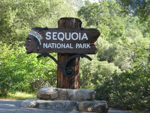 sequoia-natl-park