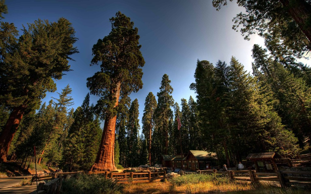 sequoia_national_park_